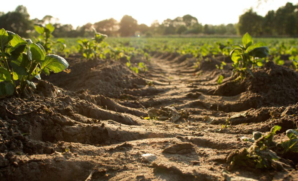 organic soil grows healthy food festival